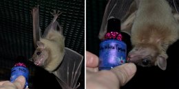 Bat World saves these helpful cuties.